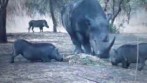 rhinoflip