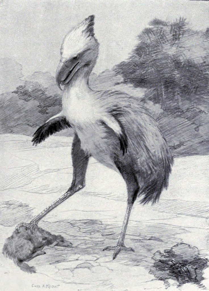Phorusrhacos, a South American terror bird Artwork by Charles Robert Knight