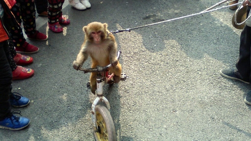 Performing monkey