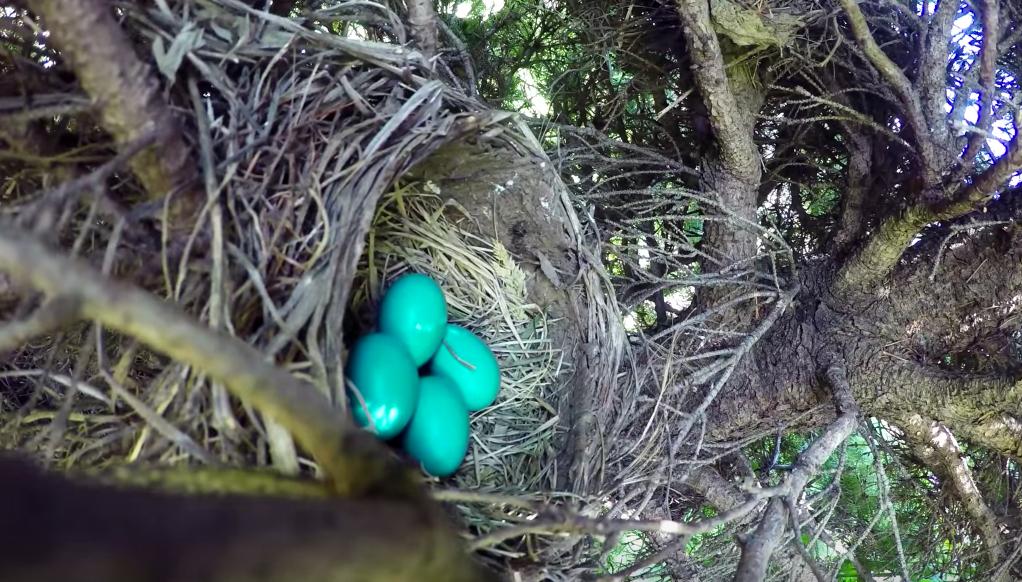 The eggs' last moment...