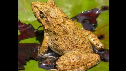 billfrog 3