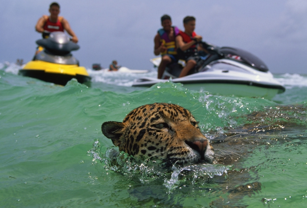 jaguar swimming pool - photo #21