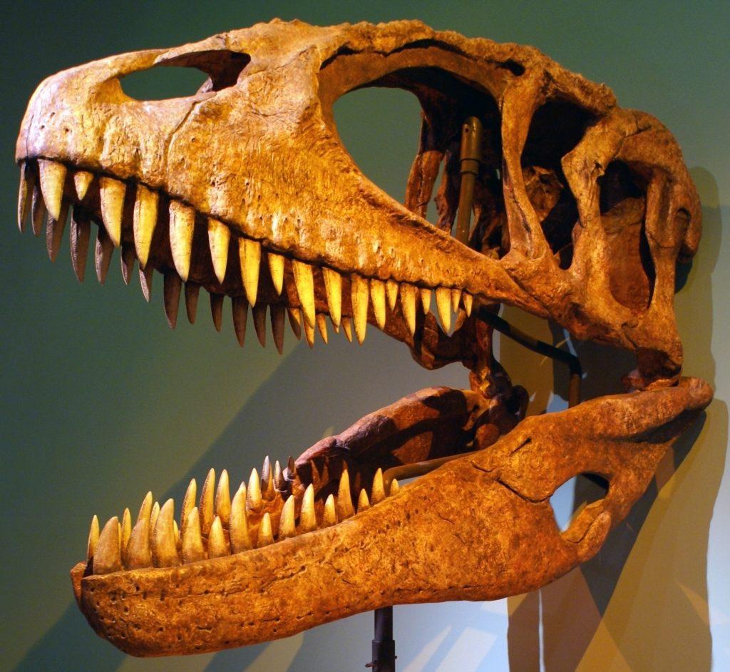 carcharodontosaurus-photo-by-franko-fonseca