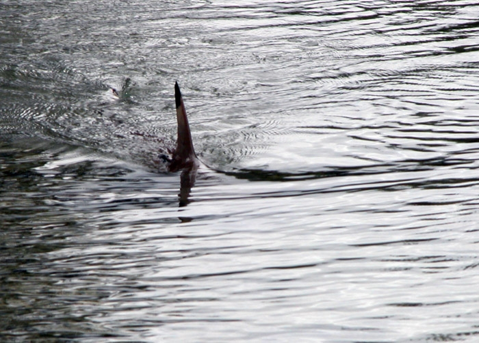 shark-fin-photo-by-tom-burke