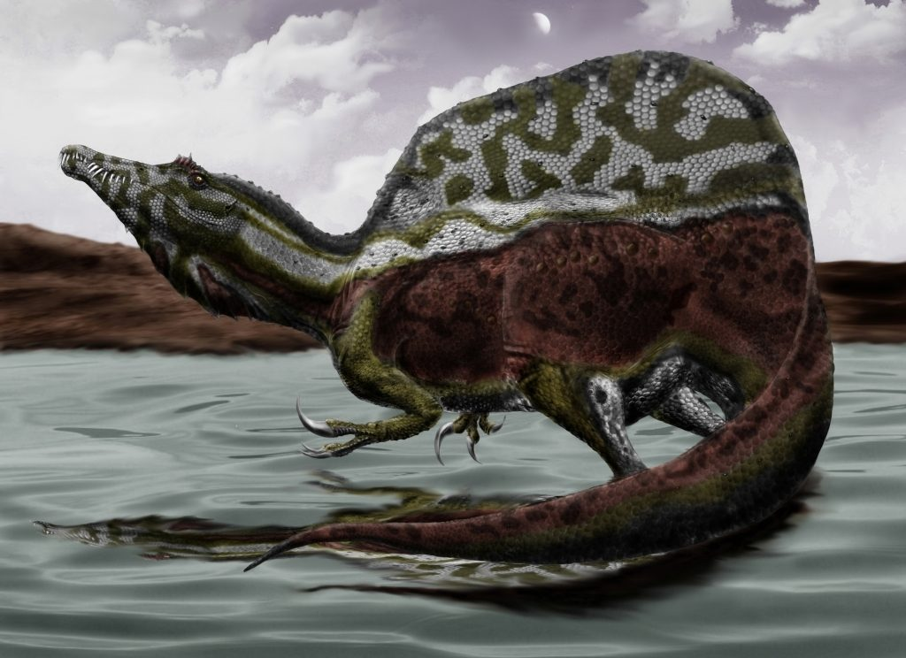 spinosaurus-illustration-by-durbed