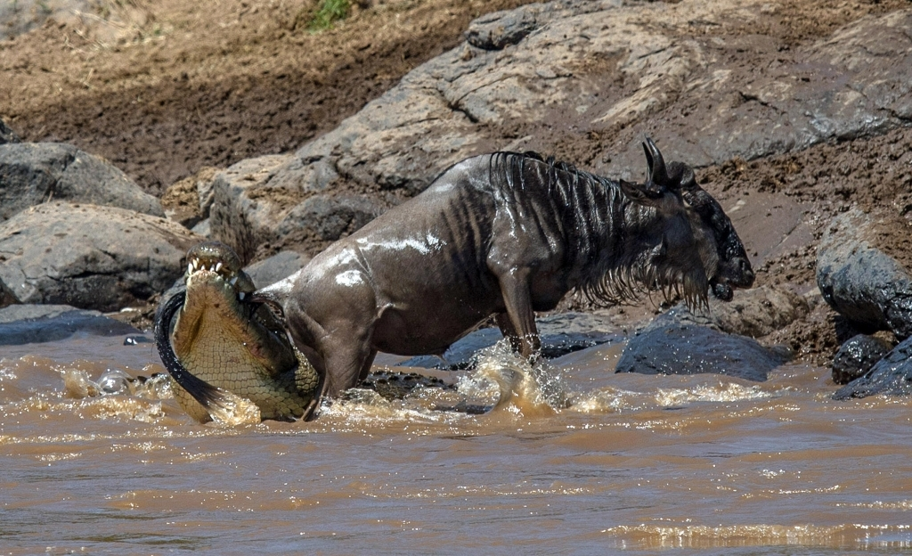 caters_croc_got_my_tail_08