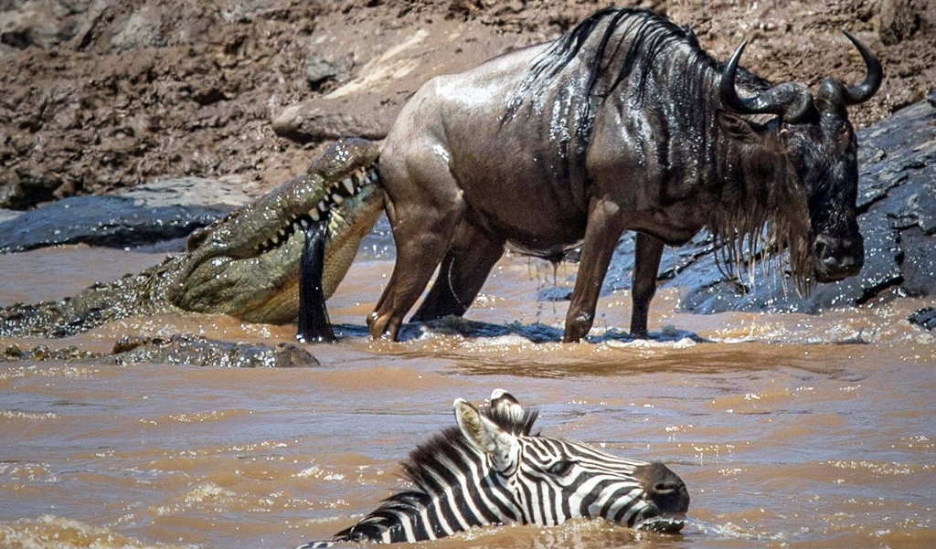 caters_croc_got_my_tail_11-2