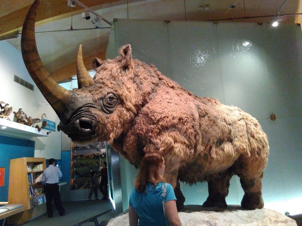 Woolly Rhino. Photo by Janet McKnight.