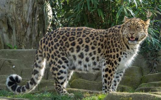 Can you name this animal?