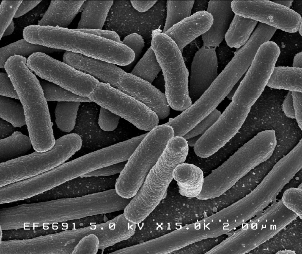 How many bacteria are in the human body?