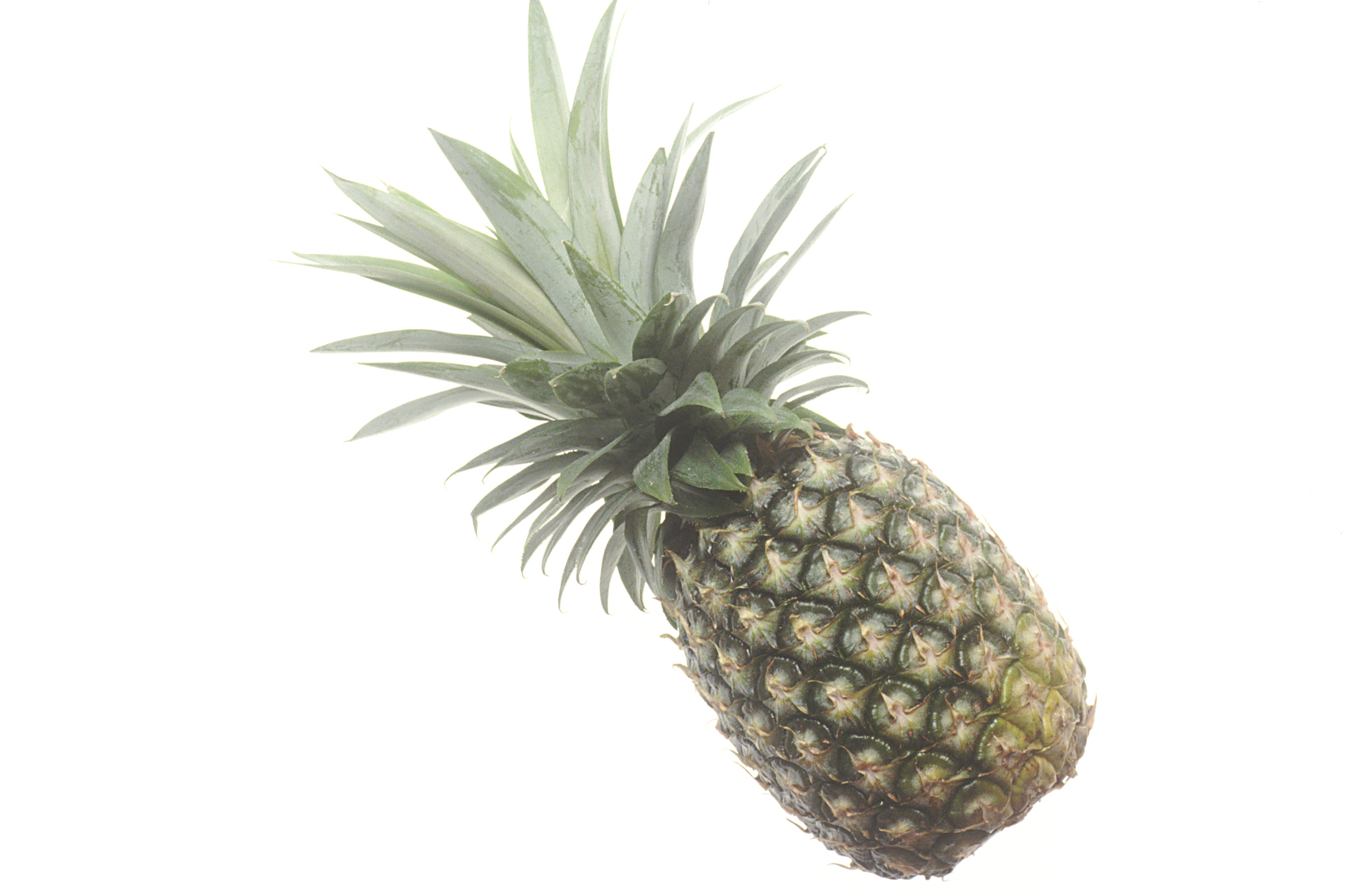 How long does it take a pineapple to grow?