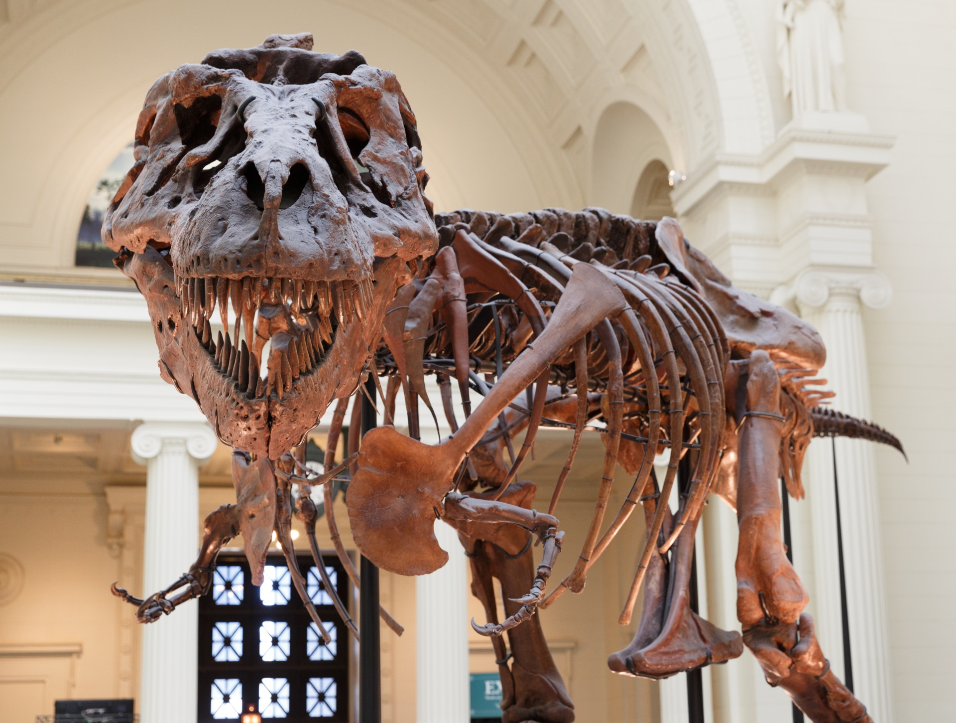 Which of these animals existed closest in time to Tyrannosaurus?