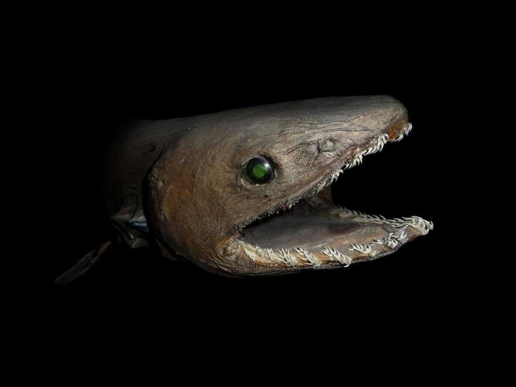 Eel Vs Shark Deep Sea Monster Battle