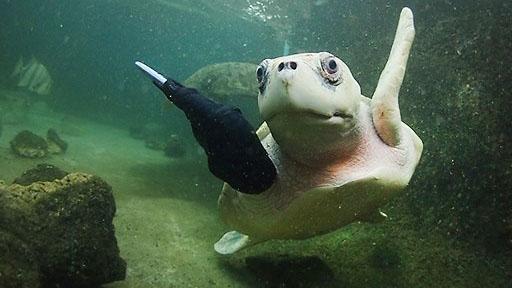 lola-sea-turtle
