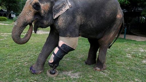 mosha-elephant