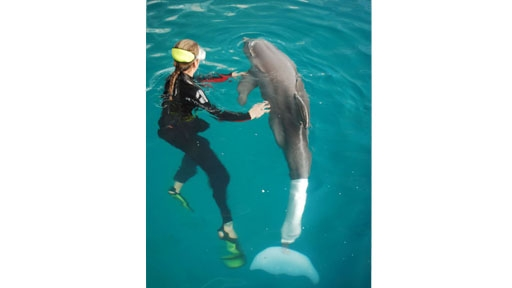 winter-dolphin