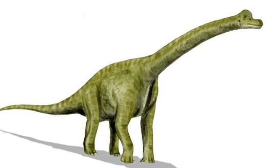 Can you name this dinosaur?