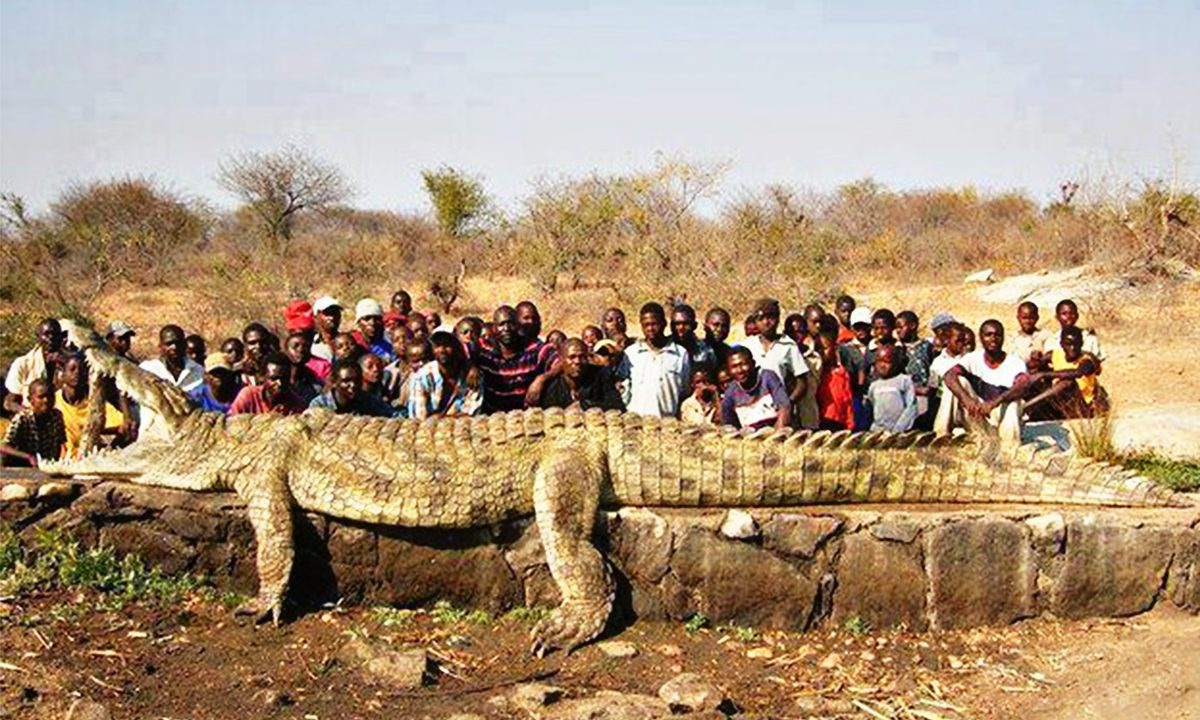 The Biggest Crocs Ever Recorded